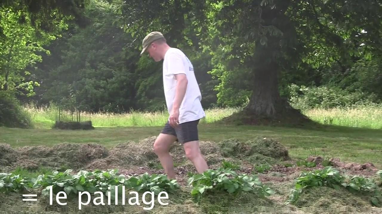 paillage tonte de pelouse