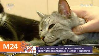 В Госдуме рассмотрят новые правила содержания животных в цирке и зоопарке - Москва 24