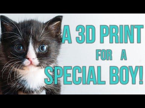 Special Kitten Gets a 3D Print for Megaesophagus