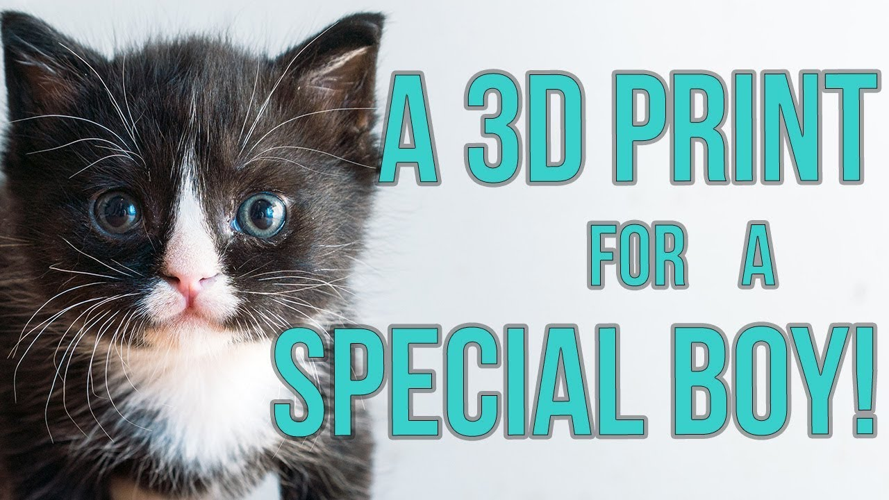special-kitten-gets-a-3d-print-for-megaesophagus