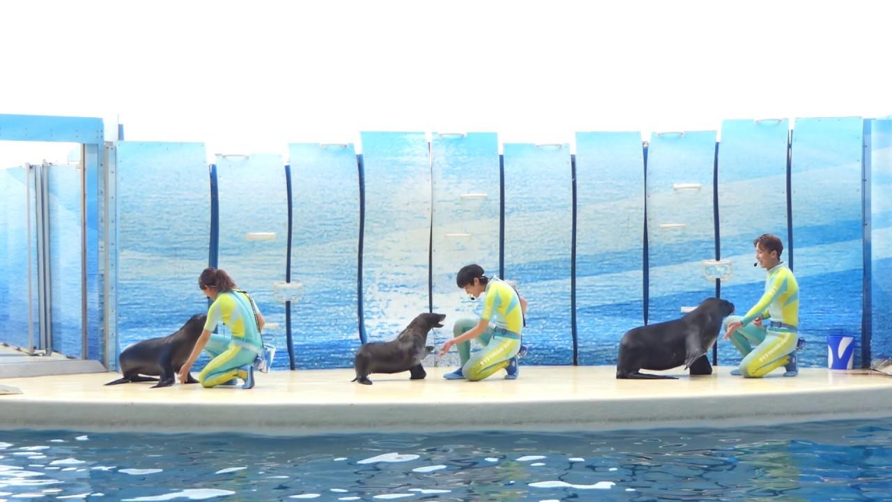 えのすい きずな(2019.03.31)14:45~ 【新江ノ島水族館】 - YouTube