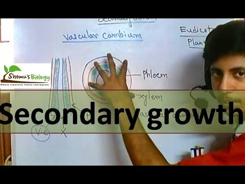 Secondary growth in plants
