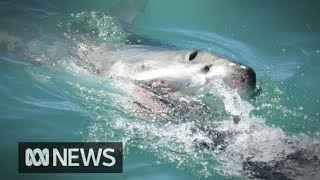 Man on sailing holiday dies after shark attack  | ABC News