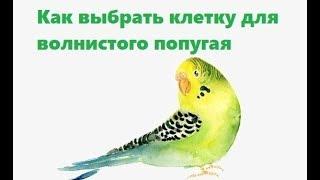 Как выбрать клетку для волнистого попугая. Ветеринарная клиника Био-Вет.