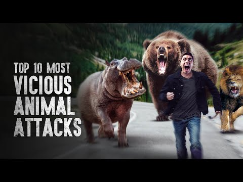 Top 10 Most Vicious Animal Attacks and How to Survive Them