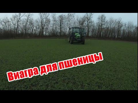 Подкормка озимой пшеницы препаратом V-AGRO осенью трактором DEUTZ-FAHR 115G