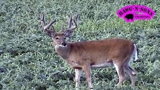 BIGGEST Deer Non Typical Buck Hunting - HawgNSonsTV