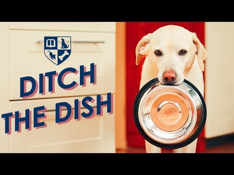 Get Rid of the Food Bowl and Resolve your Dogs Behavior Problems