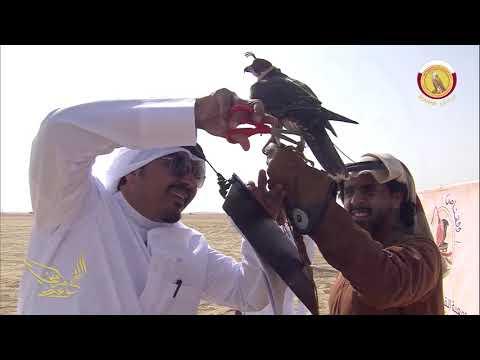 بطولة هدد التحدي الجزء -1-┇┇مهرجان مرمي للصقور┇2017┇Marmi Festival