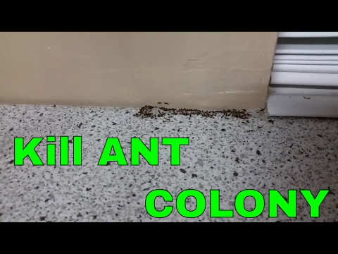 Get rid of ants in your kitchen the whole colony.