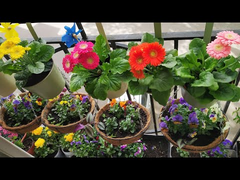 सातरंगी फूलों से सजी छोटी सी बालकॉनी Small Balcony Garden /Organic Gardening landscape