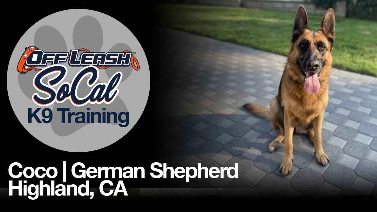 Coco   German Shepherd   Highland, CA