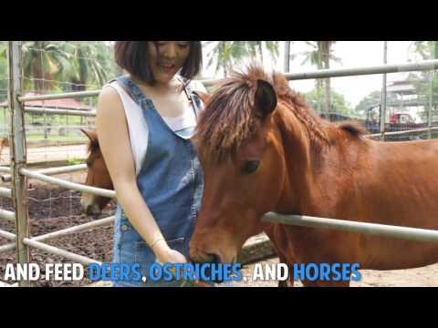 Malacca Tropical Fruit Farm:  Pick Fruits and Pat Deers in Melaka!