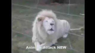 [Best Animal Fights]  [Wild Animal Attack]  When animals attack humans