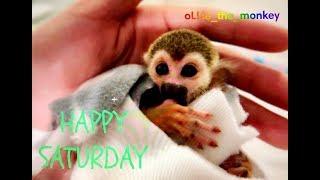 baby monkey puppy