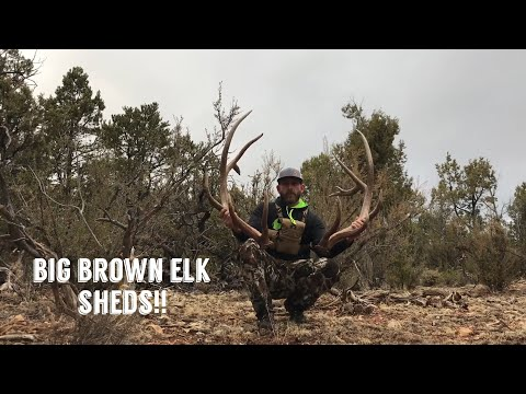 "Brown Elk Shed Hunting In The Snow ! "" INQUEST 2018 "" Antler Trader"