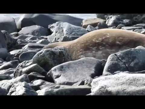 Croisière à la voile Antarctique
