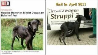Karin, Jürgen Und Emil - Gesucht & Gefunden Im Tierheim Hannover