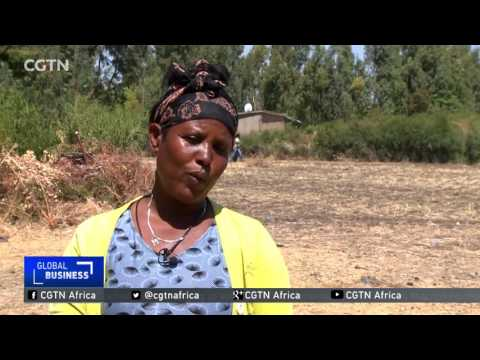 Ethiopia's small- scale farmers turn to micro-finance institutions