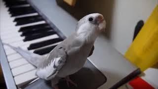 Приколы с попугаями