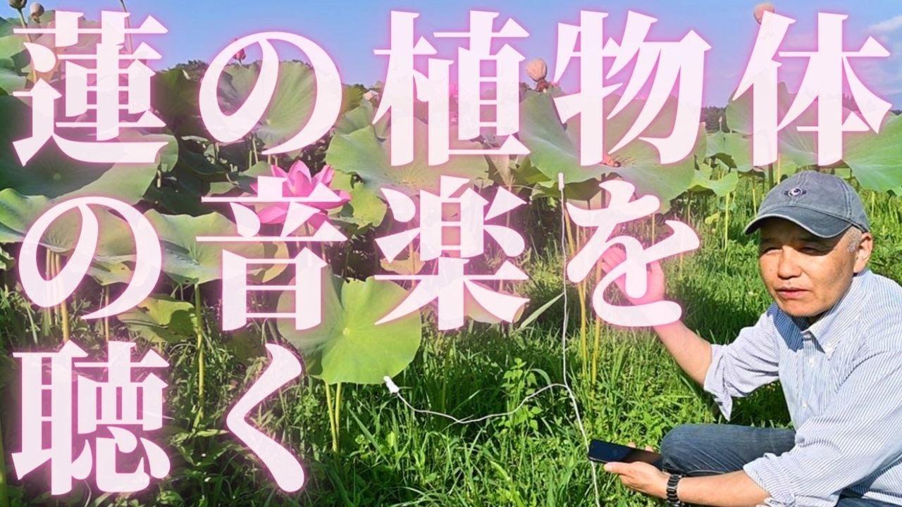 ハス🌺(蓮)の植物体からメロディを抽出しました‼ 蓮は他の植物と異なり、とても静かな音楽をいつも奏でています。