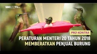 PERMEN 20 TAHUN 2018 MEMBERATKAN PENJUAL BURUNG - PRO KONTRA