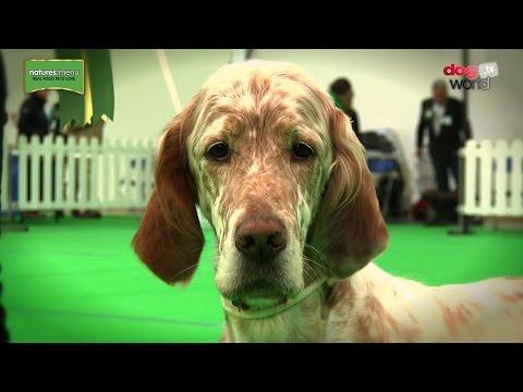 WELKS Championship Dog Show 2017 - Gundog group - Shortlist