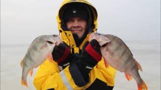 Веселая ловля окуня на чёрта (Куршский залив, январь 2017 г.)