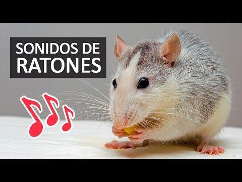 SONIDOS DE RATONES Efectos de Sonido HD