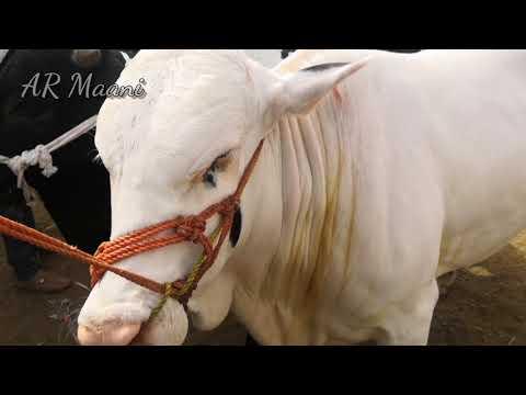 Bull Market || Malir Mandi Rates || Part 1