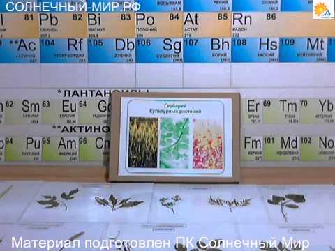 Изготовление гербария