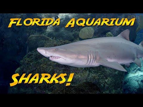 Sharks at the Florida Aquarium | JONATHAN BIRD'S BLUE WORLD