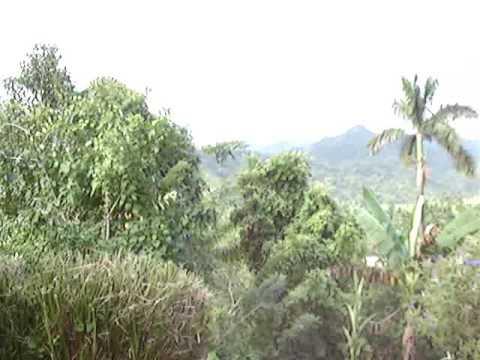 Riogran Jamaica Health Farm 1 of 2