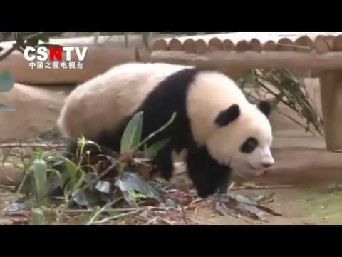 China Star News TV 2017116