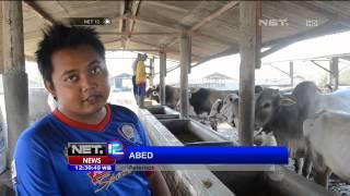 Desa Sukolilo di Tuban Jawa Timur, Penghasil Sapi Bekualitas - NET12 - Stafaband