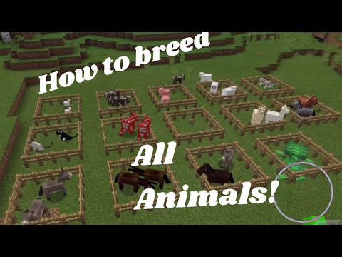 ✔️Minecraft PE: How To Breed All Animals
