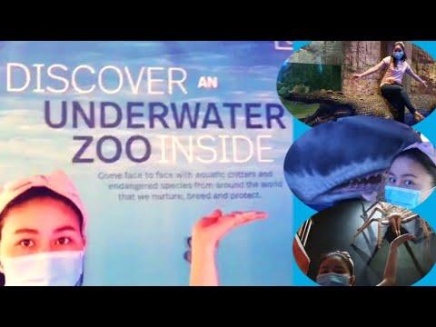 Discover an Underwater Zoo inside Dubai Mall    Lordz Vlogs