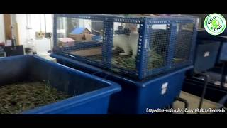 Integrated System Rabbit and Worms (Vermicomposting)