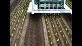 Automatic seedling planting machine on farm in Australia