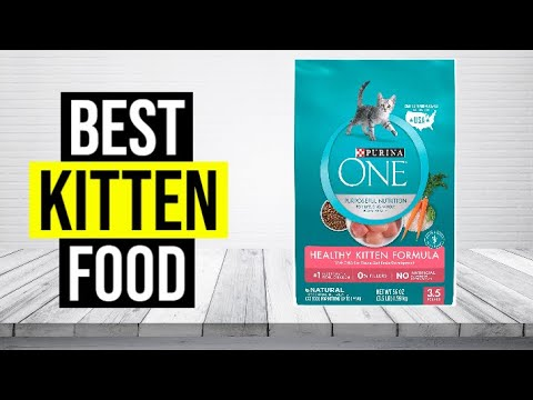 BEST KITTEN FOOD 2020 - Top 5