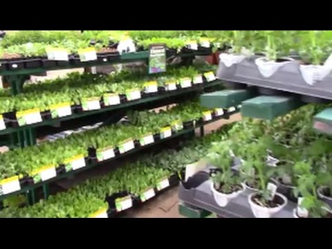 VEGGIE MANIA - Fall Vegetable Gardening in Florida - The Perfect ...