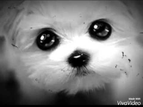 B b chien trop mignon youtube - Image bebe chien ...