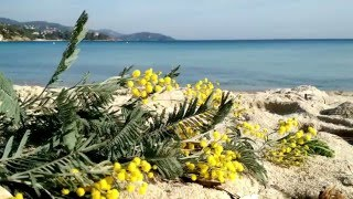 Camping on the Mimosa Route, Cote d'Azur (France, winter, cooking)