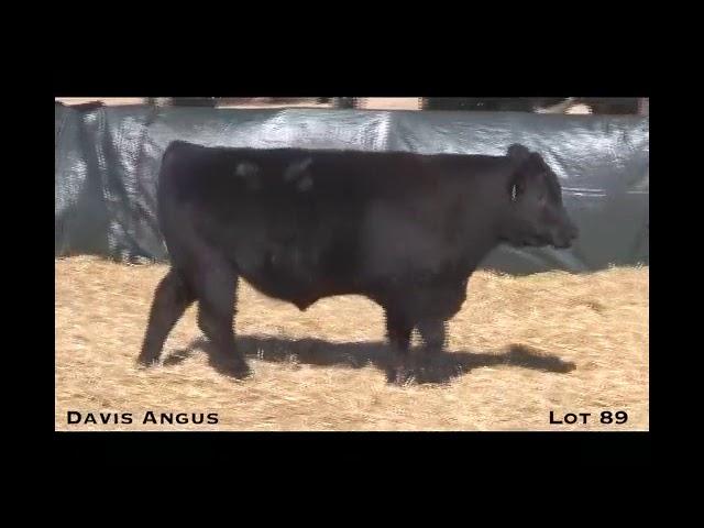 Davis Angus Lot 89