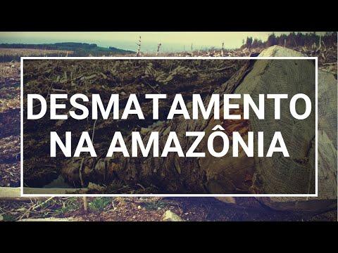 Desmatamento Na Amazônia: Causas E Como Combater