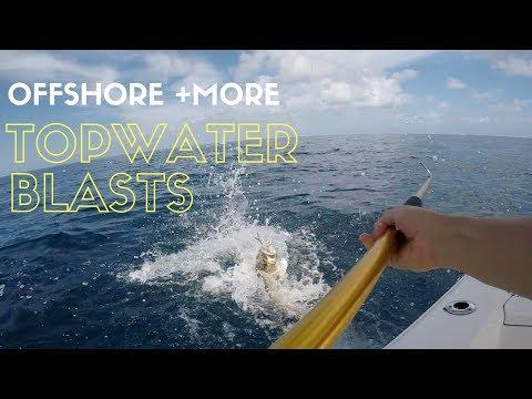 Offshore Topwater BLASTS & Big Sharks!!!