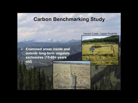 Understanding Carbon Storage and Greenhouse Gas Uptake in Gr