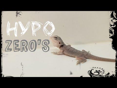 Wow More Hypo Zero's