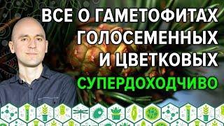 39. Все о гаметофитах голосеменных и цветковых супедоходчиво