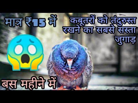 Pigeons Market Price 2018 - 35 waley Kabootar | ferozpuri Banky
